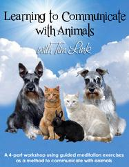 Tim's On Demand Animal Communication Workshop is Available Now!